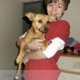 Dog Walker, Pet Sitter in Fort Smith