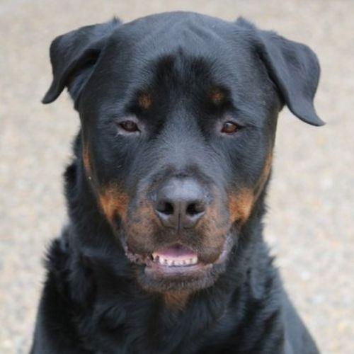 Pet Care Provider Michelle Burns Gallery Image 1