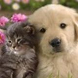 Very reliable pet sitter, would love to care for your pets