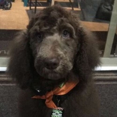 Pet Care Job Robert D's Profile Picture