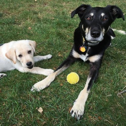 Pet Care Provider Paula C Gallery Image 1