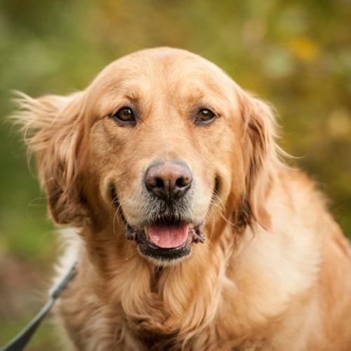 Pet Care Provider Anna W Gallery Image 1