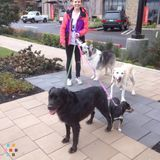 Dog Walker, Pet Sitter in Mountain View