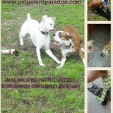 Dog Walker, Pet Sitter in Mc Henry