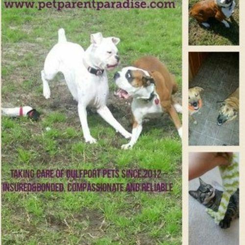 Pet Care Provider Pet P's Profile Picture