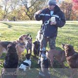 Dog Walker, Pet Sitter in Manhattan