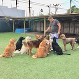 Qualified Dog Walker in Miami