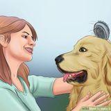 Stony Plain Pet caregiver