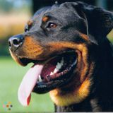 Dog Walker, Pet Sitter in Claremont