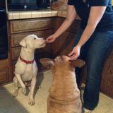 Gig Harbor Dog Sitter Available For Work
