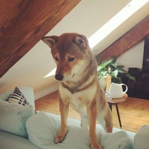 Pet Care Job Joana C Gallery Image 1