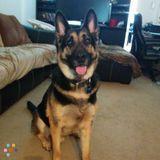 Dog Walker, Pet Sitter in Baton Rouge