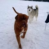 Pet Sitter (any) Dog Walker Trainer ernight Available 24/. locations. laurierwoods. 2acre 150ft Lakefrnt 25mins Hwy11N