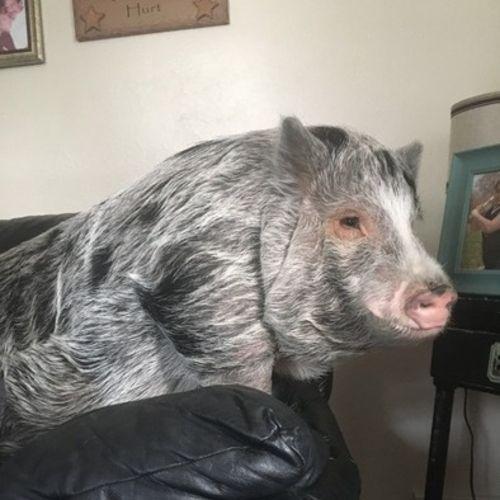 Pet Care Provider Madison M's Profile Picture