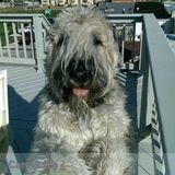 Dog Walker Job, Pet Sitter Job in Ocean City