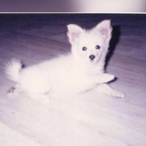 Pet Care Provider Shruti. C's Profile Picture