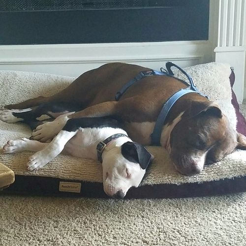 Pet Care Provider Megan Baker Gallery Image 2