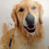 Dog Walker, Pet Sitter in London