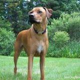 Dog Walker, Pet Sitter in Bishop