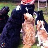 Dog Walker, Pet Sitter in Pinole
