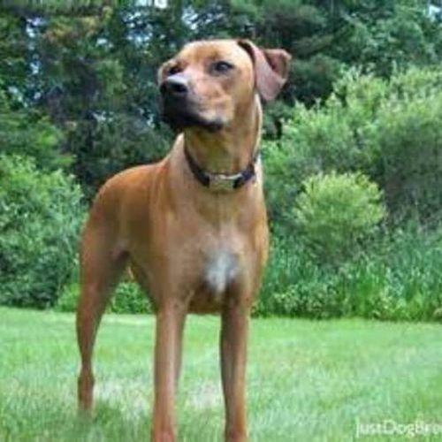 Pet Care Provider Tammy M's Profile Picture