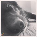 Dog Walker, Pet Sitter in Provo