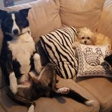 Interested In a Dog Sitter Opportunity in Regina