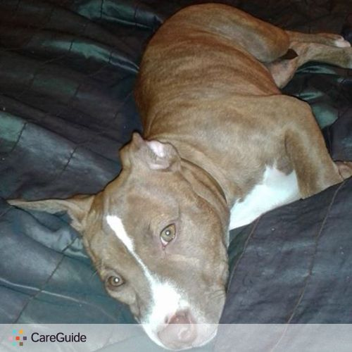 Pet Care Provider Nichole C's Profile Picture