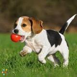 Dog Walker in Hamilton