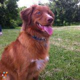 Dog Walker, Pet Sitter in Kitchener