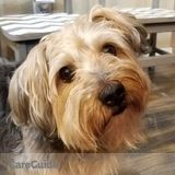 Dog Walker, Pet Sitter in Oviedo