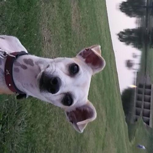 Pet Care Provider Jessica Arroyo's Profile Picture