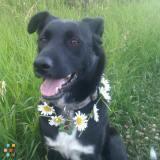 Dog Walker in Ottawa