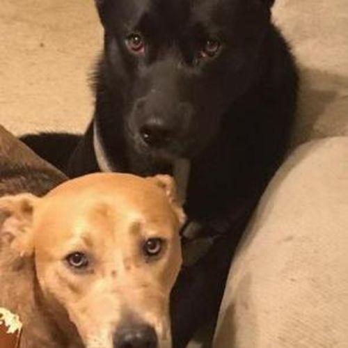 Pet Care Provider Perla Reyes Gallery Image 1