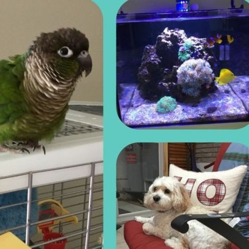 Pet Care Provider Tracey T Gallery Image 2