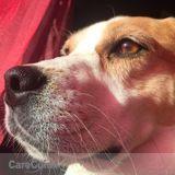 Dog Walker, Pet Sitter in Sturgis