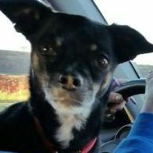 Pet Care Job Heather Emery's Profile Picture