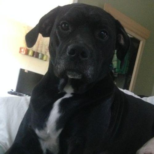 Pet Care Job Kristin Kolby's Profile Picture