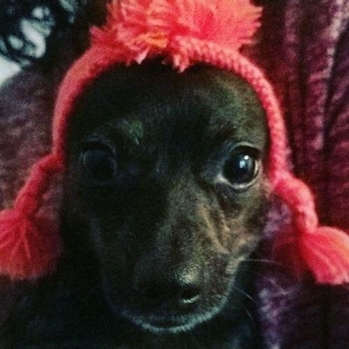 Pet Care Job Maddi F's Profile Picture