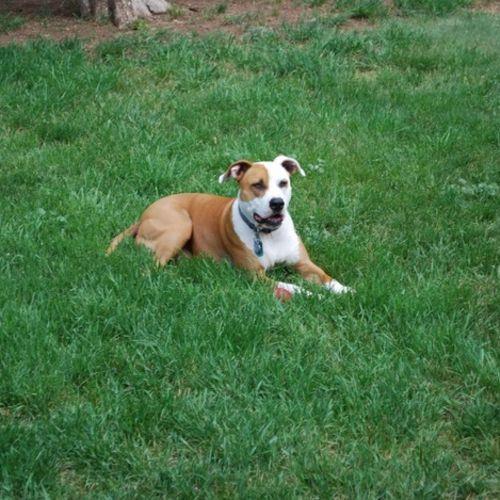 Pet Care Job Jay Adler's Profile Picture