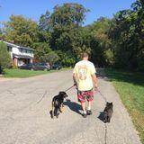 Dogs Best Friend
