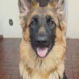 Job Opportunity in Kingsport, TN Pet Walker / Sitter