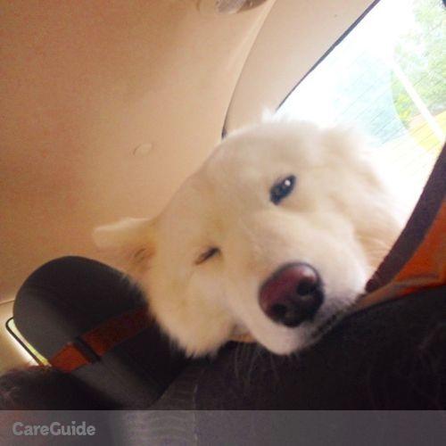 Pet Care Provider Nicolas D's Profile Picture