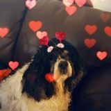 Monroe, Georgia Pet Sitting Professional