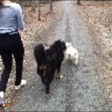 Dog Walker, Pet Sitter in Westmount