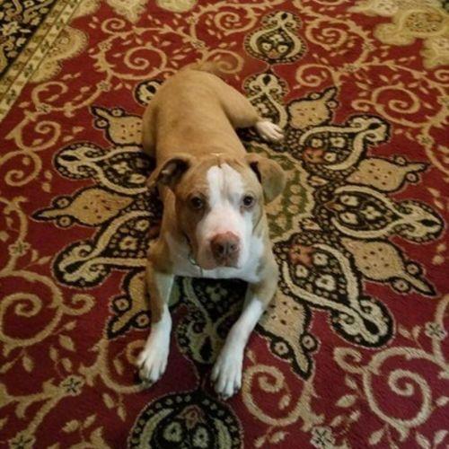 Pet Care Provider Thomas Mckay's Profile Picture