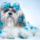 Dog Walker, Pet Sitter, Kennel in Chalmette