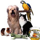 Pet Sitter in Southampton