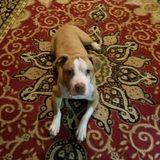 Dog Walker, Pet Sitter in Newton Falls