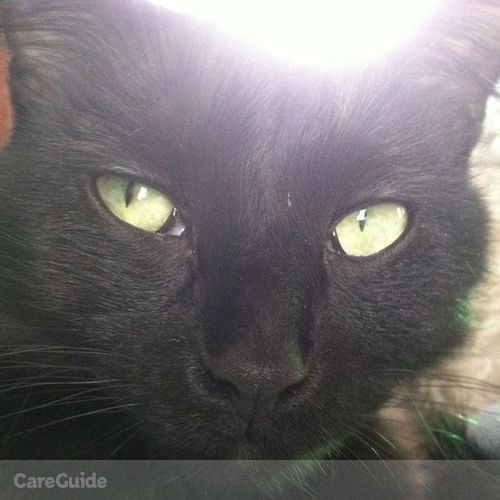 Pet Care Provider Lacey Edwards's Profile Picture